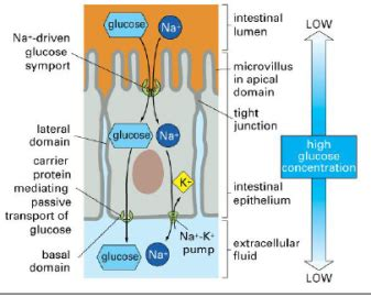 Cell Bio #1: Microscopy, Cell Membranes and Junctions