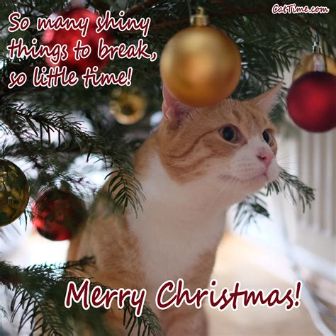 15 Cat Christmas Cards You Can Share With Your Friends And