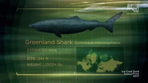 Greenland Shark   River Monsters Wiki   FANDOM powered by