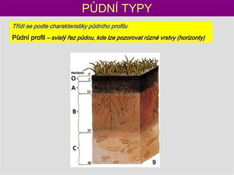 PPT - PŮDY PowerPoint Presentation, free download - ID:4608449